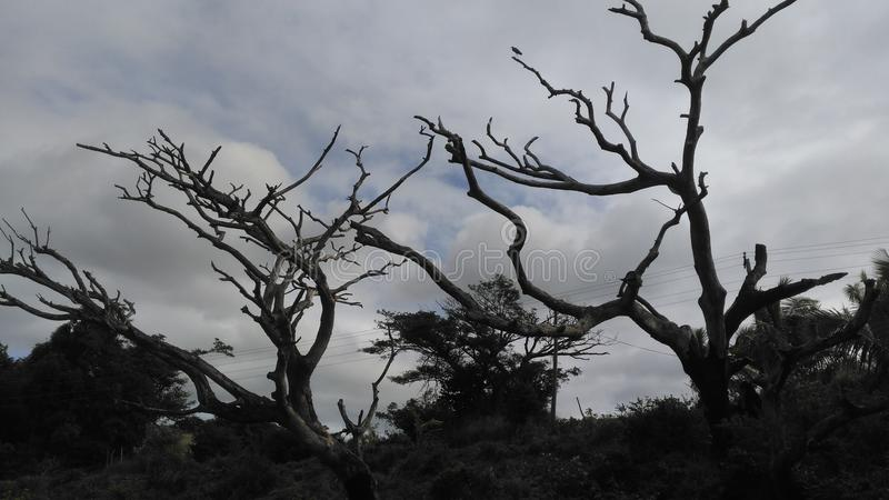 Árvores inoperantes fotos de stock