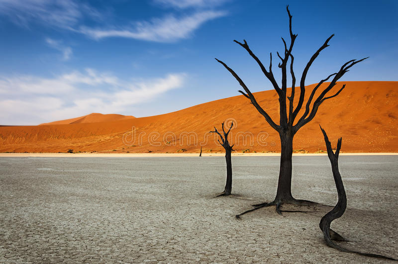 Árvores inoperantes com uma duna de areia alaranjada no fundo no DeadVlei, deserto de Namib, Namíbia fotografia de stock royalty free