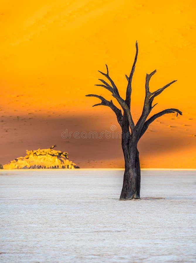 Árvores inoperantes de Camelthorn e dunas vermelhas em Deadvlei, Sossusvlei, Nam imagem de stock
