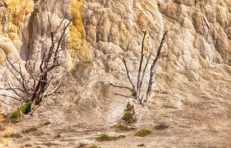 Árvores inoperantes em Mammoth Hot Springs fotos de stock royalty free