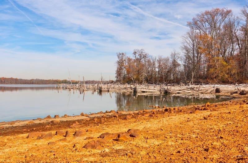 Árvores inoperantes em torno do lago fotografia de stock