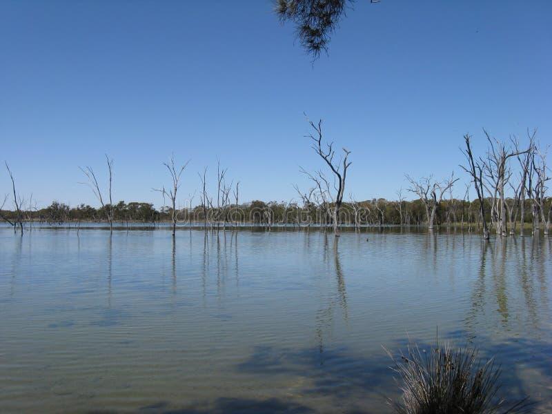 Árvores inoperantes em um lago salgado imagem de stock royalty free