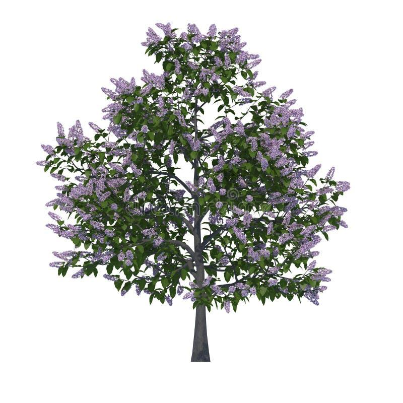 Árvores isoladas fotografia de stock