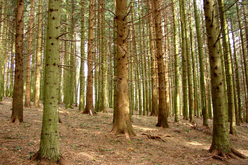 Árvores italianas fotos de stock royalty free