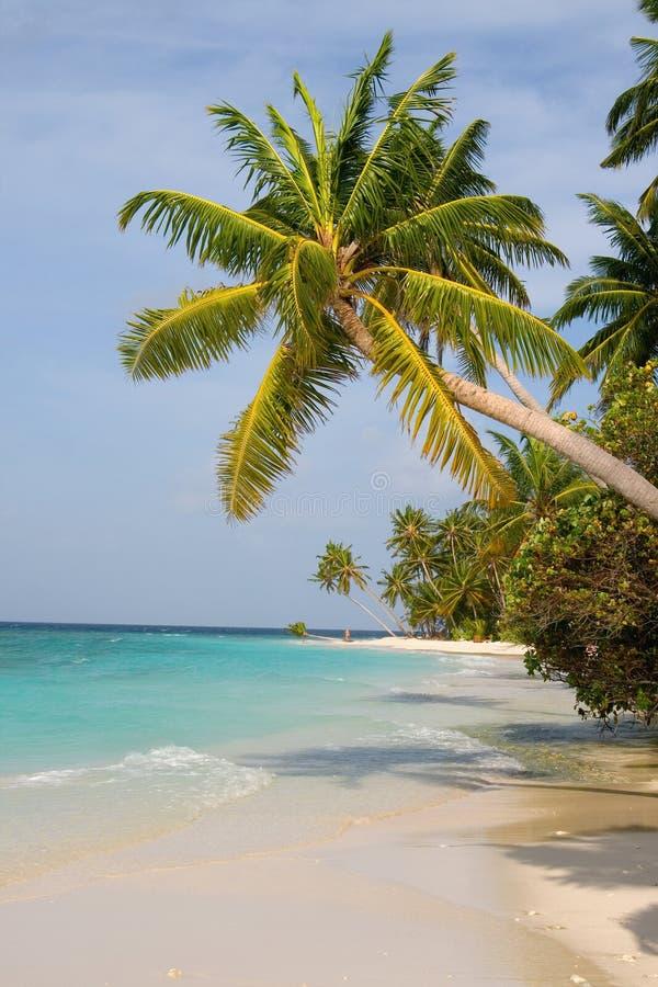 Árvores maldivas da praia e de coco da areia imagens de stock royalty free