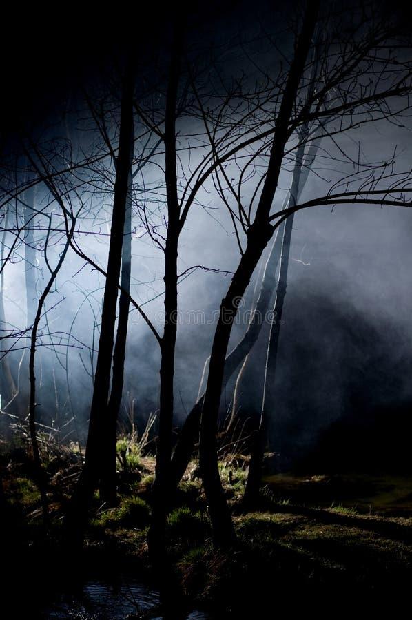 Árvores misteriosas em uma floresta assombrada imagem de stock royalty free