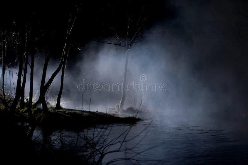Árvores misteriosas em uma floresta assombrada fotografia de stock