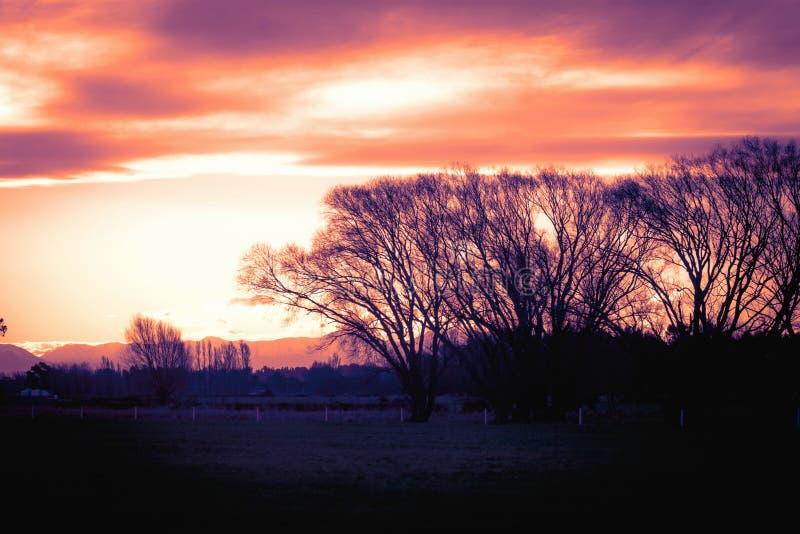 Árvores mostradas em silhueta do inverno contra um céu dramático da noite imagem de stock