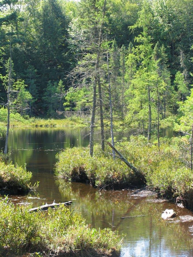 Árvores na água imagem de stock