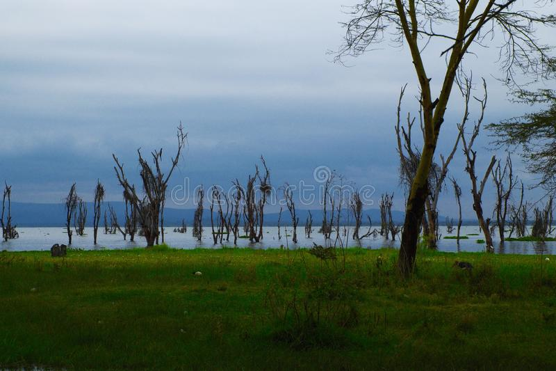 Árvores na água imagem de stock royalty free
