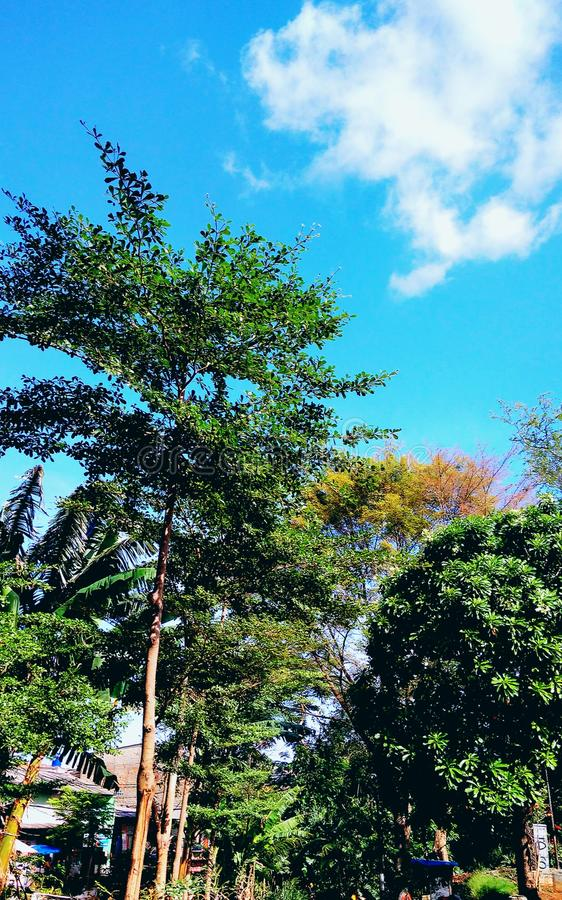 Árvores na borda da estrada fotografia de stock