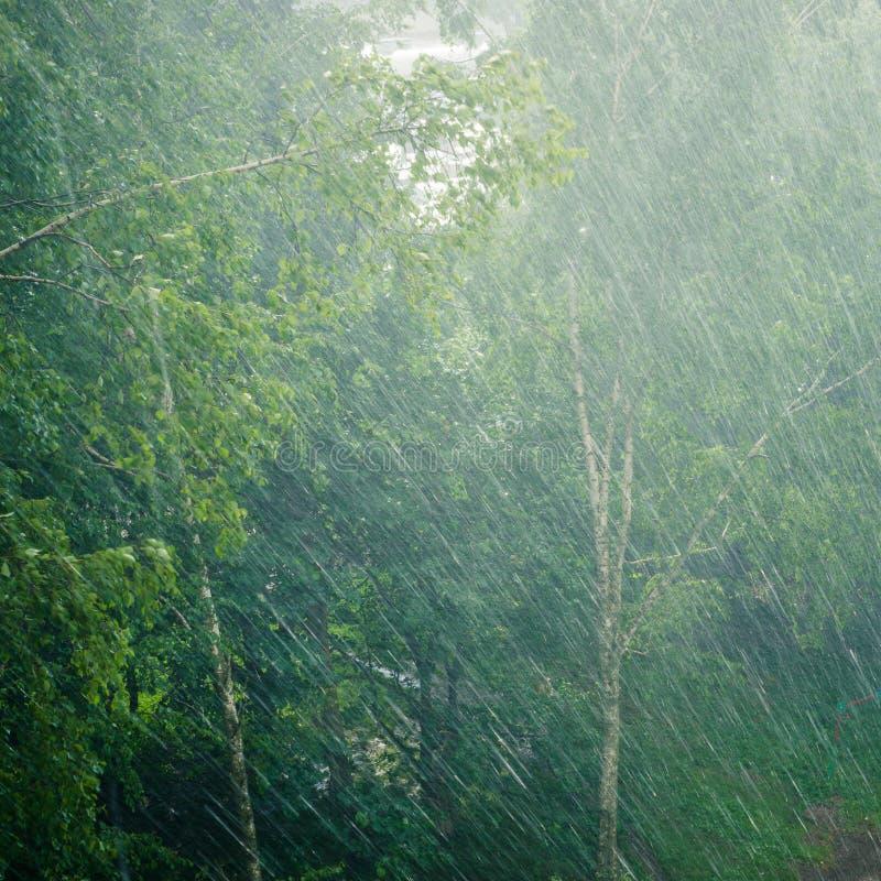 Árvores na chuva imagens de stock