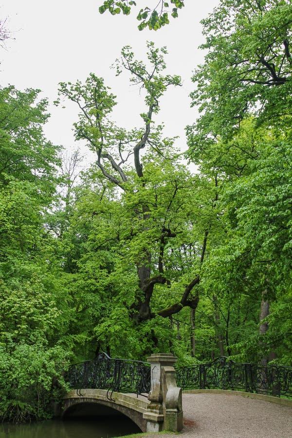 Árvores na costa da lagoa no parque perto do palácio de Nymphenburg em Munich em Baviera fotos de stock