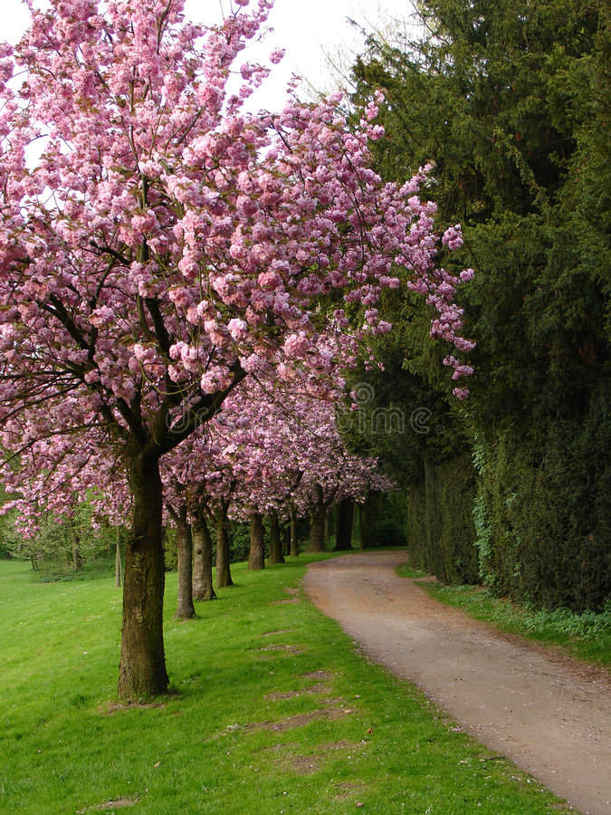 Árvores na flor imagens de stock royalty free