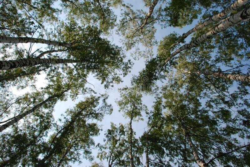 Árvores na floresta fotografia de stock royalty free