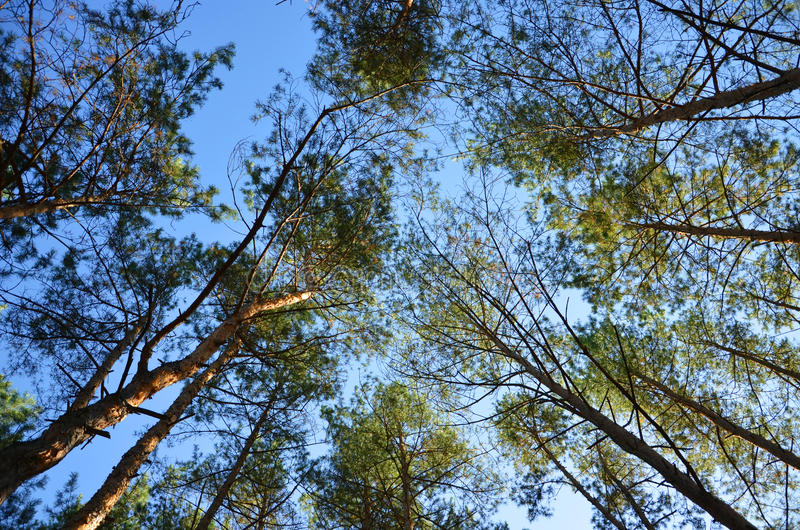 Árvores na floresta imagem de stock royalty free