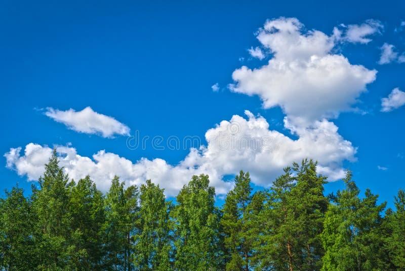 Árvores na floresta com céu azul e nuvem fotos de stock