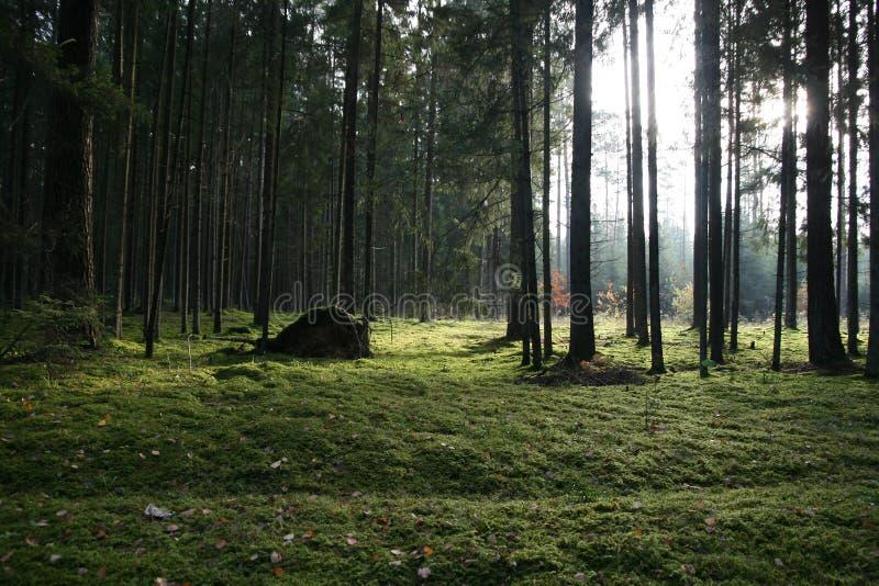 Árvores na floresta verde imagem de stock