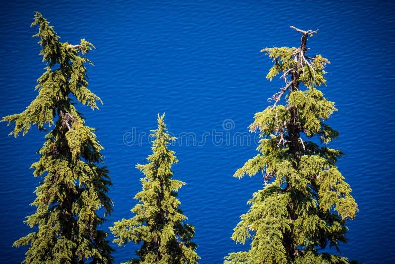 Árvores na frente do lago crater, mostrando fora a cor azul brilhante imagens de stock