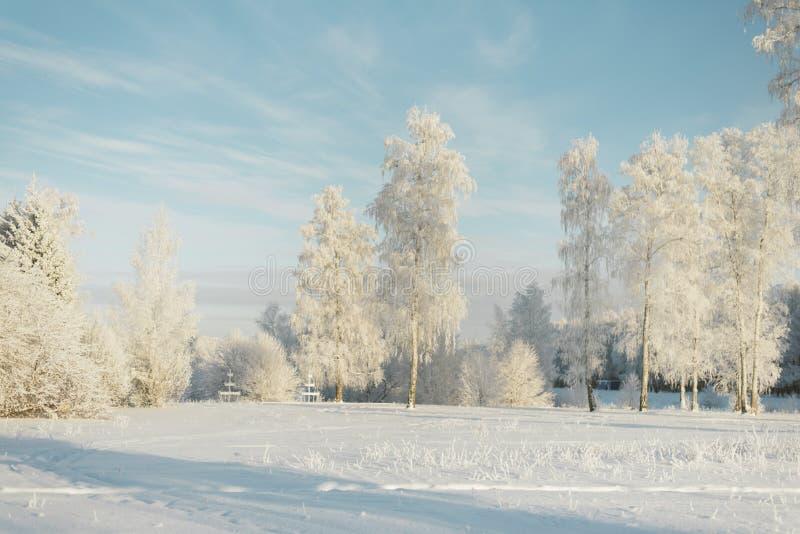 Árvores na geada em um campo nos abeto e nos pinhos da floresta cobertos com a neve imagem de stock