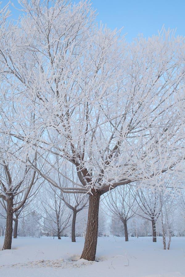 Árvores na geada na floresta do inverno imagens de stock royalty free