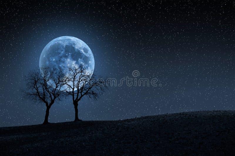 Árvores na lua azul imagens de stock royalty free