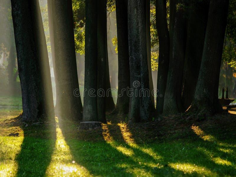 Árvores na luz imagem de stock