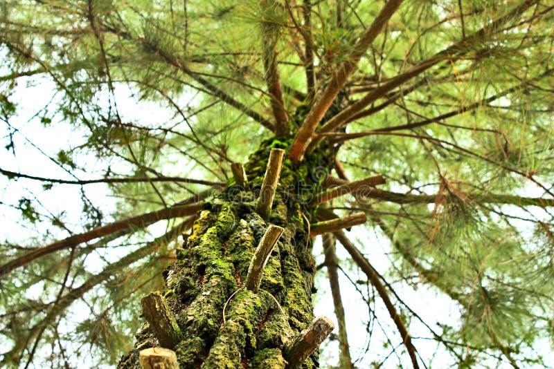 Árvores na manhã 1 fotos de stock