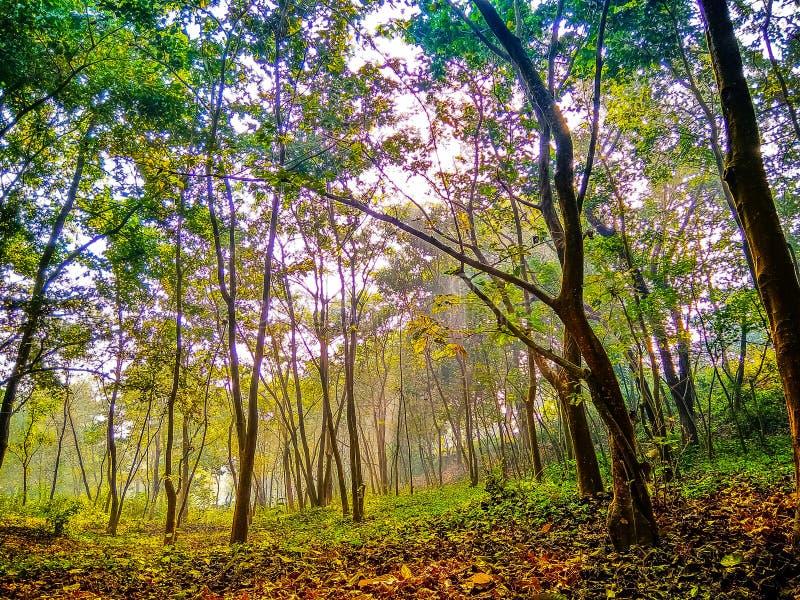 Árvores na manhã durante o nascer do sol imagens de stock