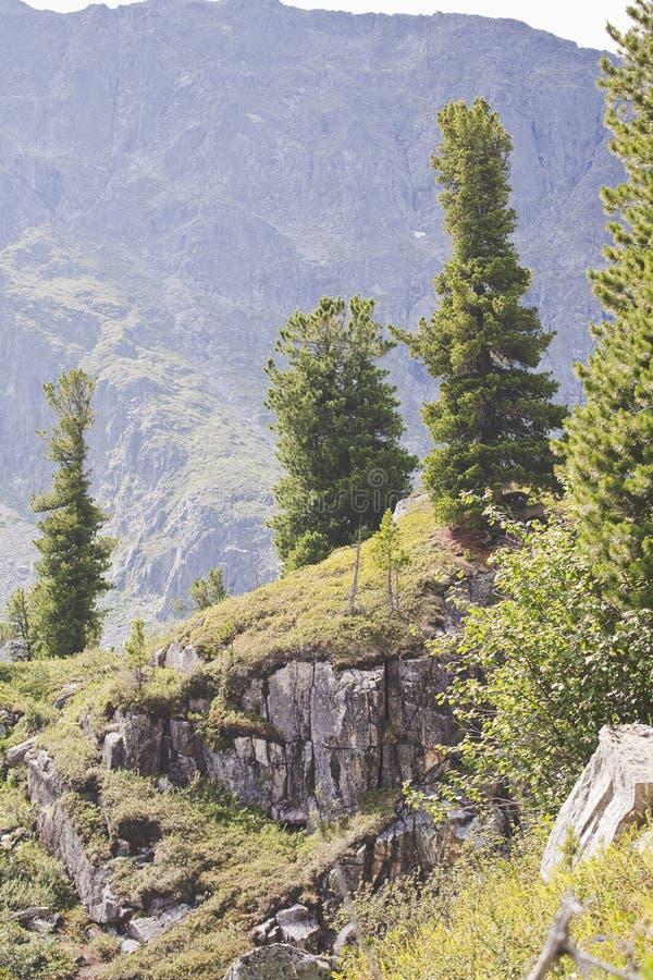 Árvores na montanha imagens de stock royalty free