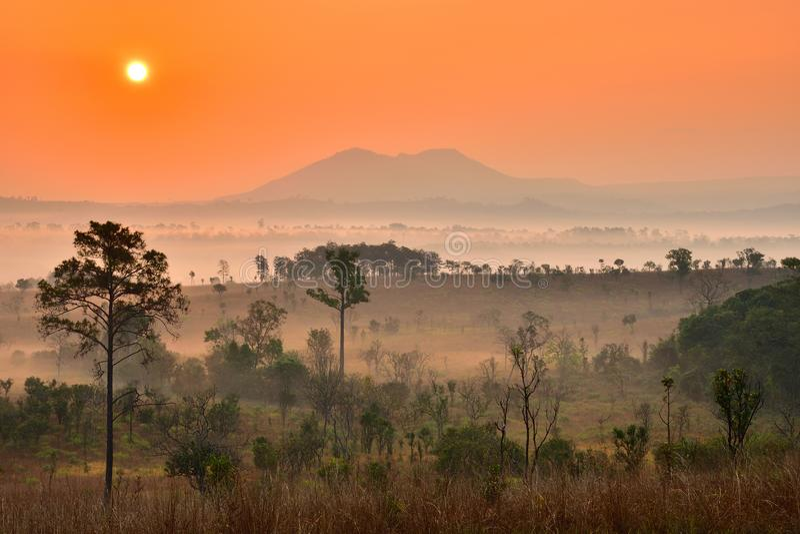 Árvores na névoa com a montanha no fundo fotografia de stock royalty free