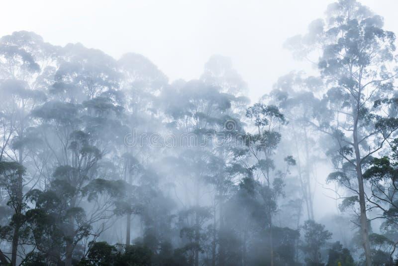 Árvores na névoa em Kodaikanal, Índia fotografia de stock
