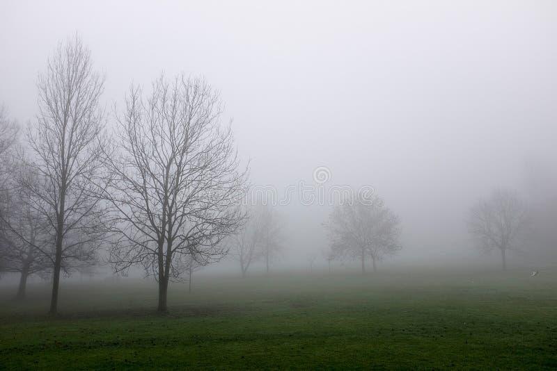 Árvores na névoa grossa fotos de stock