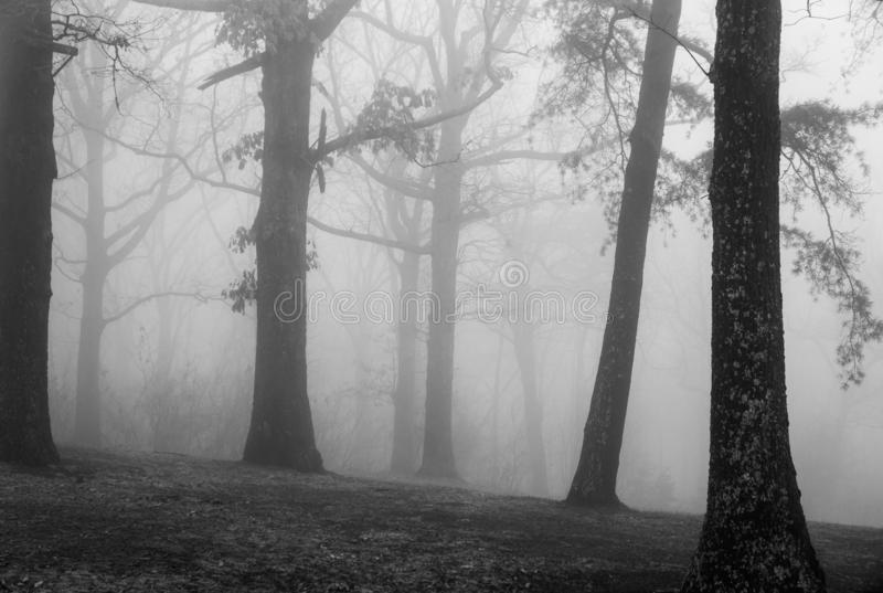Árvores na névoa Ridge Mountains azul imagem de stock