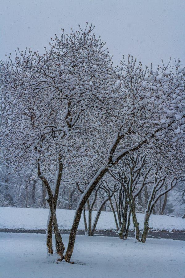 Árvores na neve imagens de stock