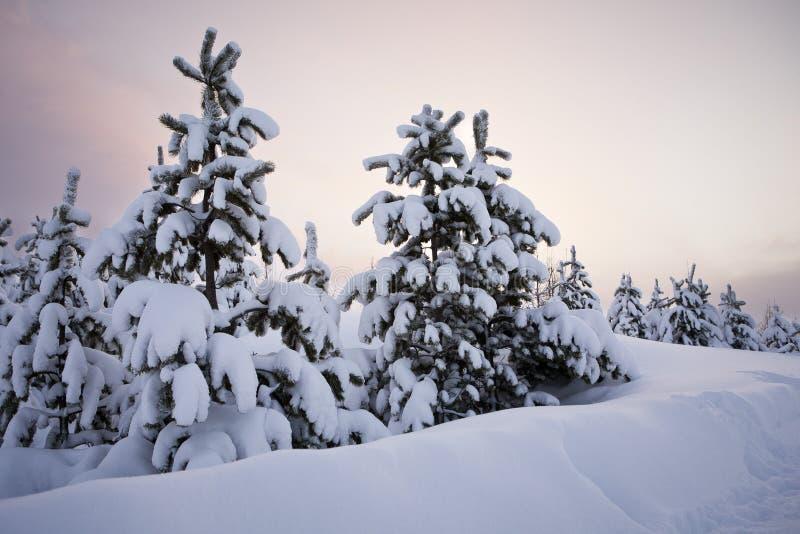 Árvores na neve fotografia de stock royalty free