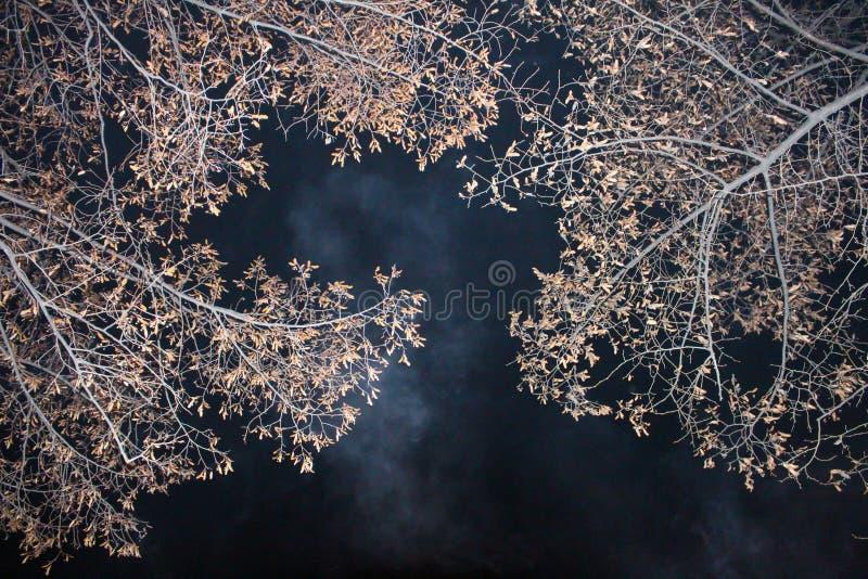 Árvores na noite imagem de stock
