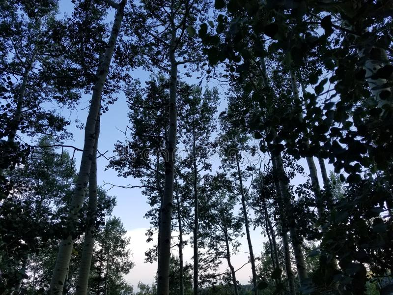 Árvores na noite foto de stock royalty free