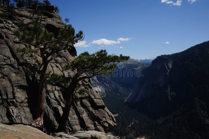 Árvores na parte superior de Yosemite Falls imagens de stock royalty free