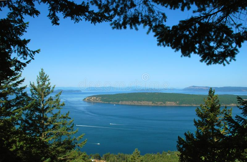 Árvores na Trilha Turtleback, Orcas imagens de stock royalty free