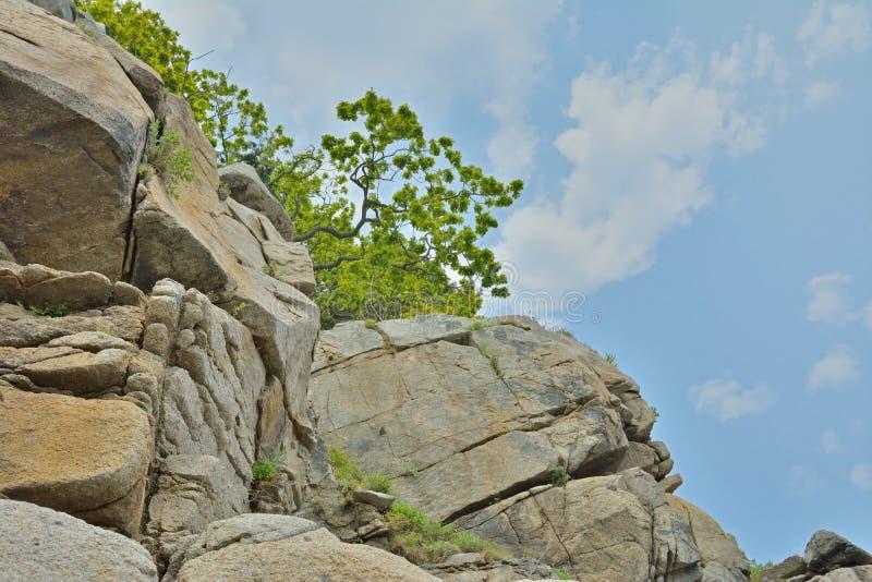 Árvores nas rochas 2 fotos de stock royalty free
