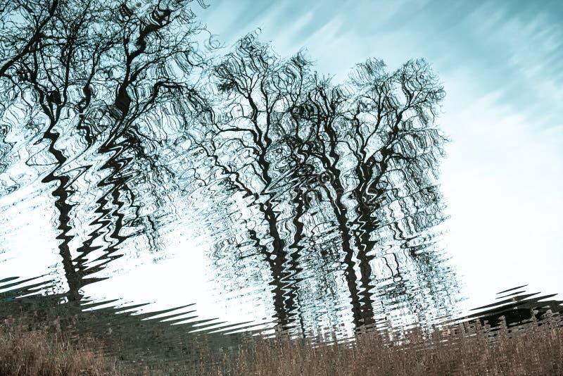 Árvores naturais reflexão sobre a superfície da água fotos de stock royalty free