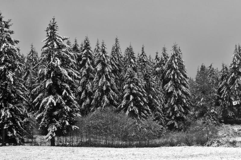 Árvores nevado fotos de stock royalty free