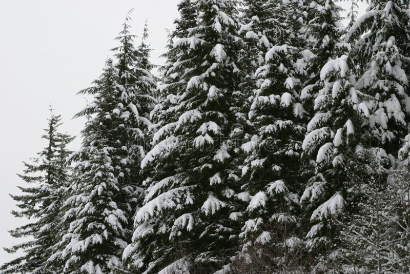Árvores nevado da montanha na montagem Hood National Forest imagens de stock royalty free