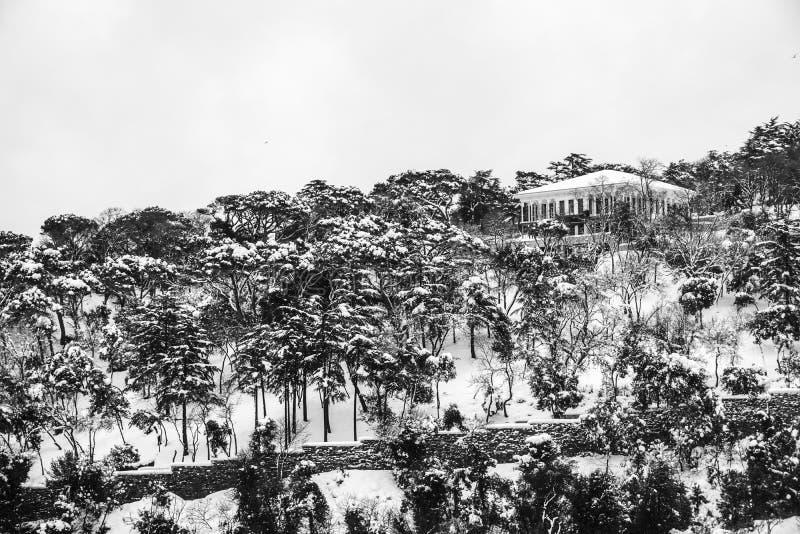 Árvores nevado na floresta fotografia de stock royalty free