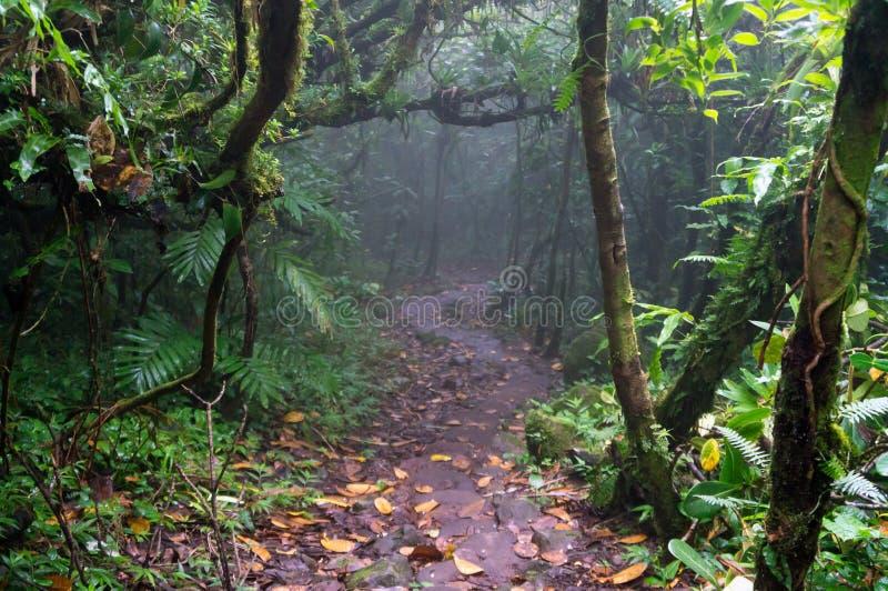 Árvores nevoentas na floresta da nuvem de Mombacho fotos de stock