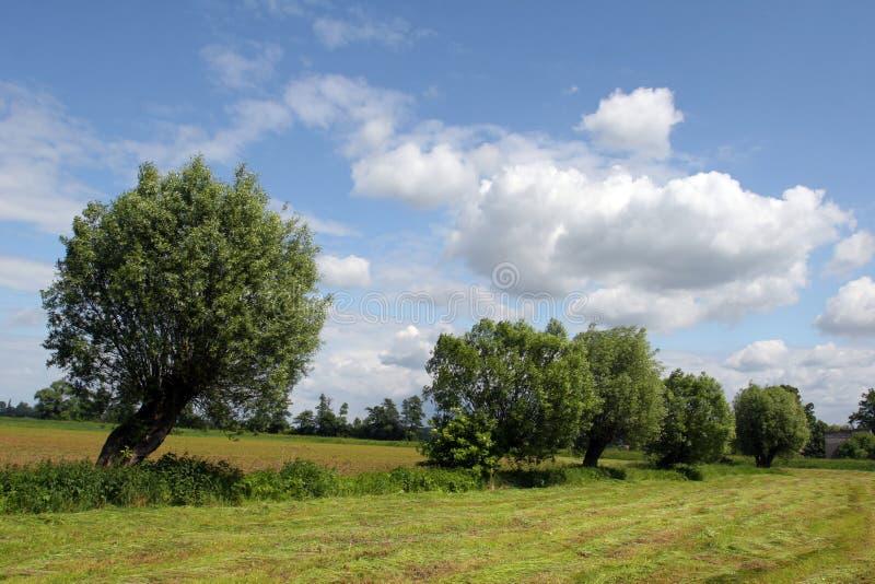 Árvores no acre foto de stock royalty free