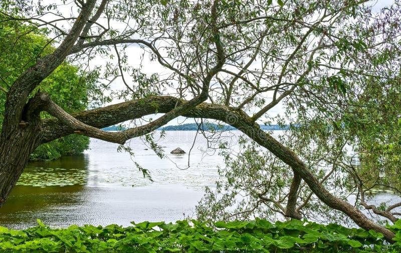 Árvores no arboreto, Tampere, Finlandia foto de stock royalty free