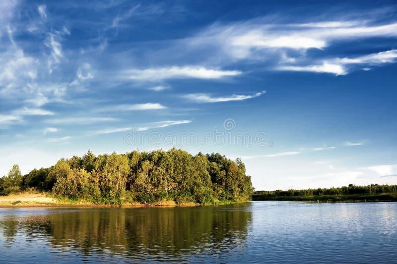 Árvores no beira-rio imagens de stock