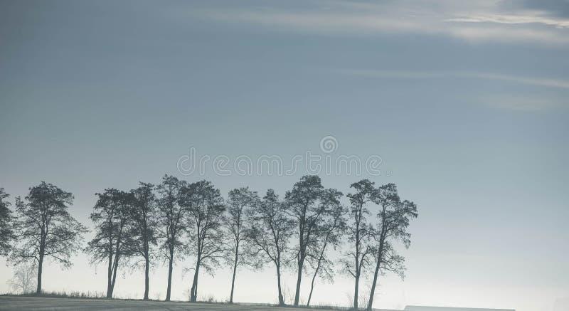 Árvores no céu imagens de stock royalty free